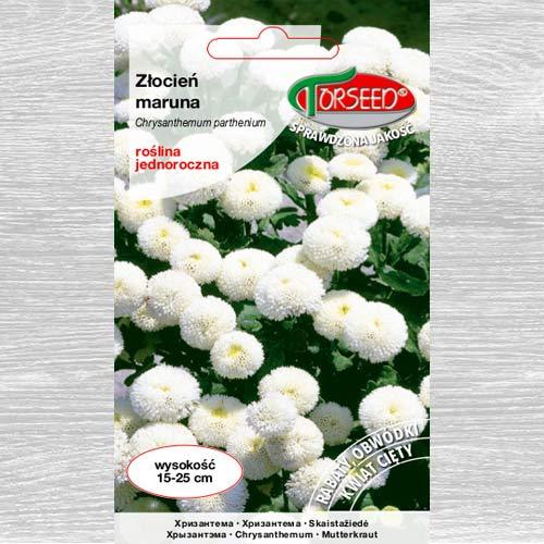 Złocień Maruna biały interface.image 1 interface.art 77563