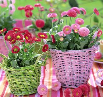 Nasiona kwiatów dwuletnich