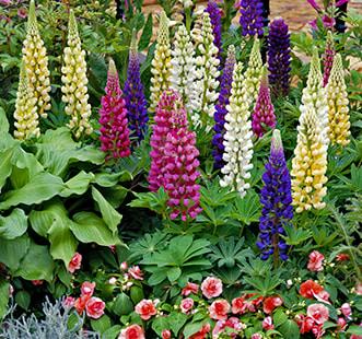 Nasiona kwiatów jednorocznych