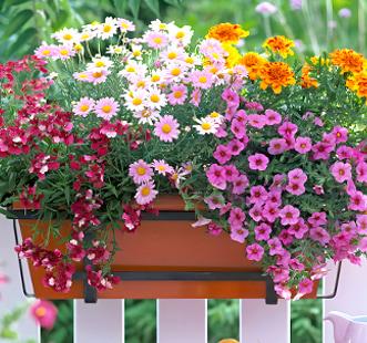Nasiona kwiatów wiszących
