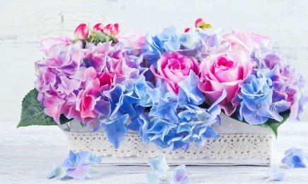 Hortensja Bouquet Rose   Dom i Sad