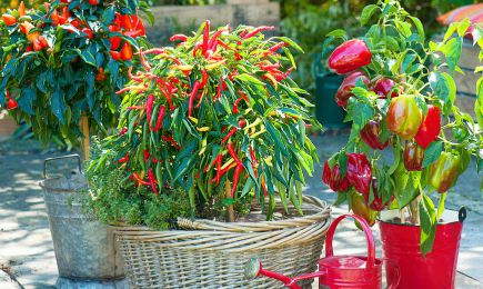 Obfity ogród warzywny   Dom i Sad
