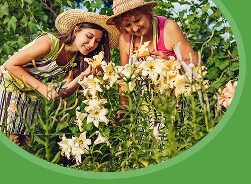 Katalog - -50% na piękne, eleganckie tulipany - Dom i Sad Polska